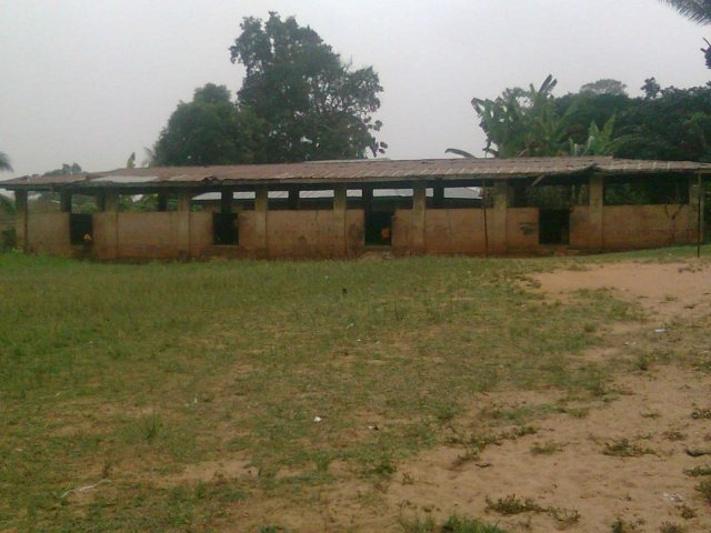 Primary School,at Nneyi